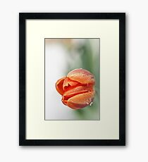 Sweet, but with a little attitude... Framed Print