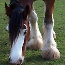 Clydesdale Grazing - Gippsland by Bev Pascoe