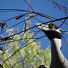 I Found Another Branch For Our Nest - Encontre Otro Cepo Para Nuestro Nido by Bernhard Matejka