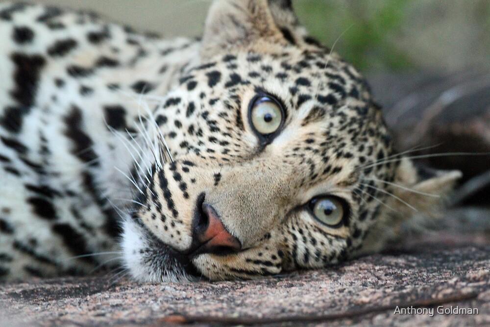 Leave me alone i am resting on my rock! by Anthony Goldman
