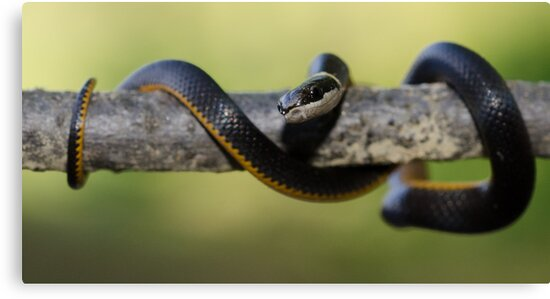 Little Snake! by vasu