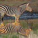 Twins! by Explorations Africa Dan MacKenzie
