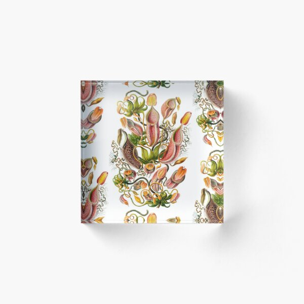 Ernst Haeckel Nepenthaceae Pitcher Plant Acrylic Block