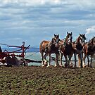Four Clydesdales by the water by Bev Pascoe