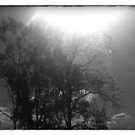 The Sun For The Trees 3 by Ryleh-Mason