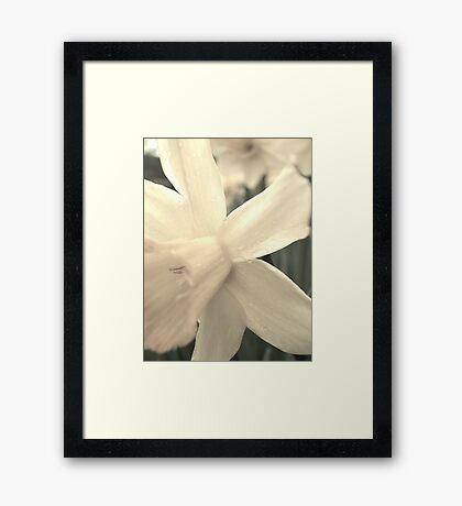 A Lighter Shade of Pale Framed Print