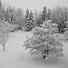 Snow in April, Alberta Canada by Jessica Chirino Karran