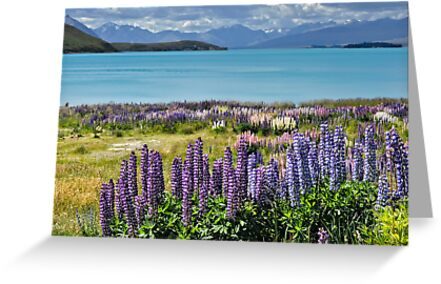 Lupins by the lake by Roberto Bettacchi