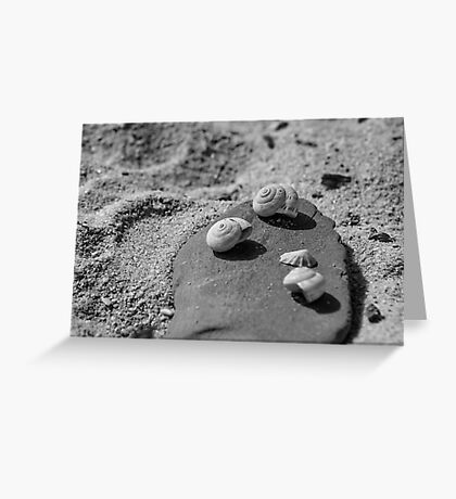 Shells On A Stone Greeting Card