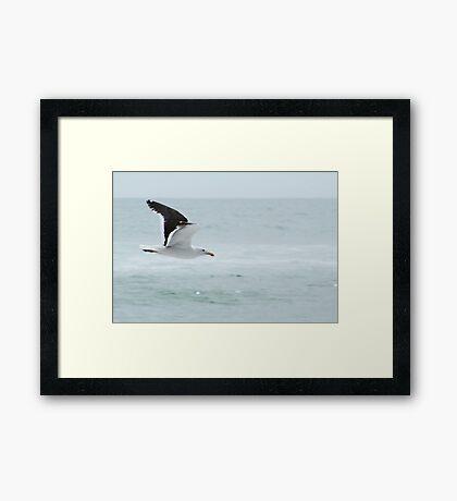 Fly Free Framed Print