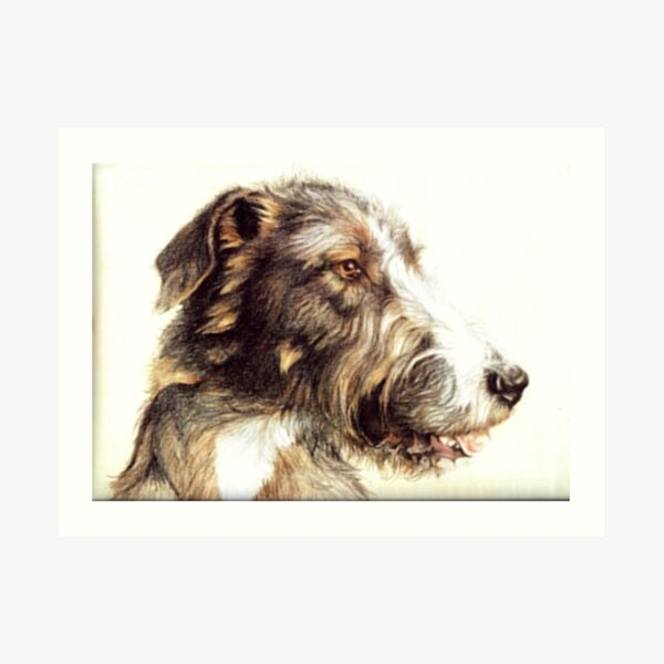 Wolfhound Art Print