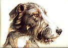 Wolfhound by Redbarron