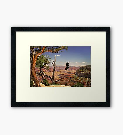 Grand Canyon Condour Framed Print