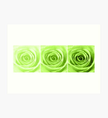Lime Green Rose with Water Droplets Triptych Art Print