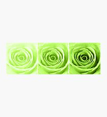 Lime Green Rose with Water Droplets Triptych Photographic Print