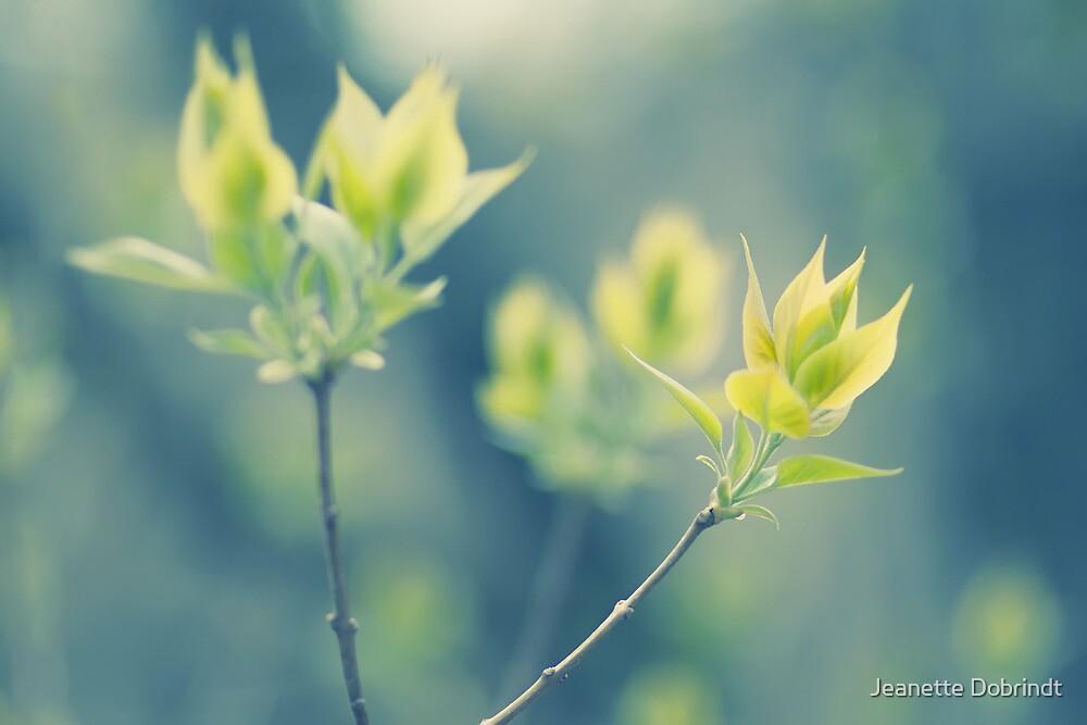 Spring II by smilyjay