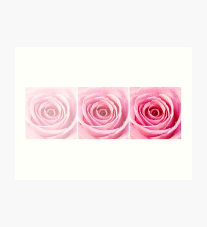 Pink Rose with Water Droplets Triptych Art Print