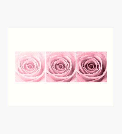 Plum Rose with Water Droplets Triptych Art Print