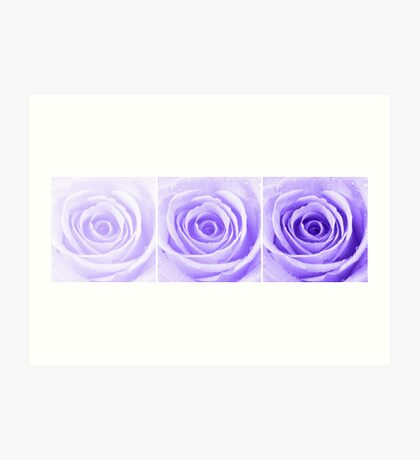Purple Rose with Water Droplets Triptych Art Print