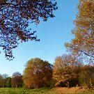 Pieces of Autumn #1 by Benedikt Amrhein
