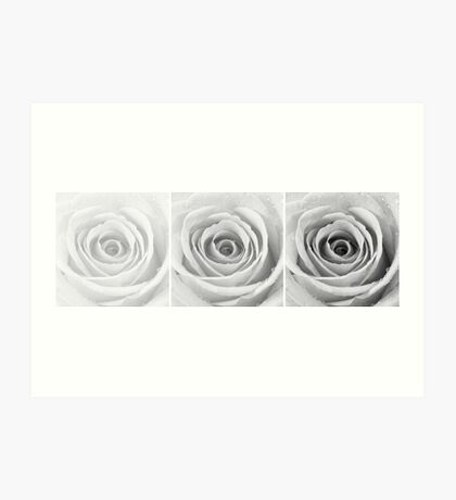 Silver Rose with Water Droplets Triptych Art Print