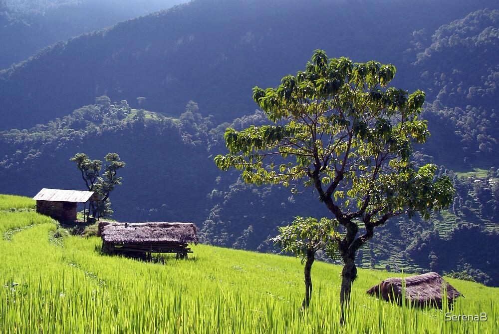 Bright Green Rice Field Nepal by SerenaB