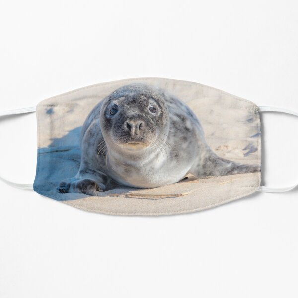 Grey Seal Pup on a Beach with Sweet Eyes Mask