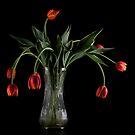 Wilting Tulips  by RandiScott