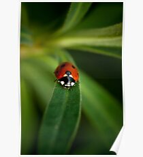 Mr Ladybird walking in my garden Poster