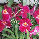 The World of Orchids by orko