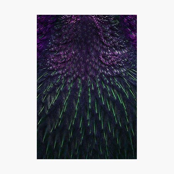 Birdfeathers, Purple & Green Photographic Print