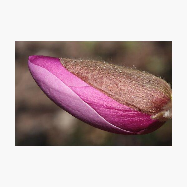 burgundy turgescence Photographic Print