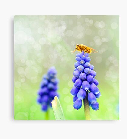 Lovely Blue Canvas Print
