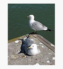 Love Gulls Photographic Print