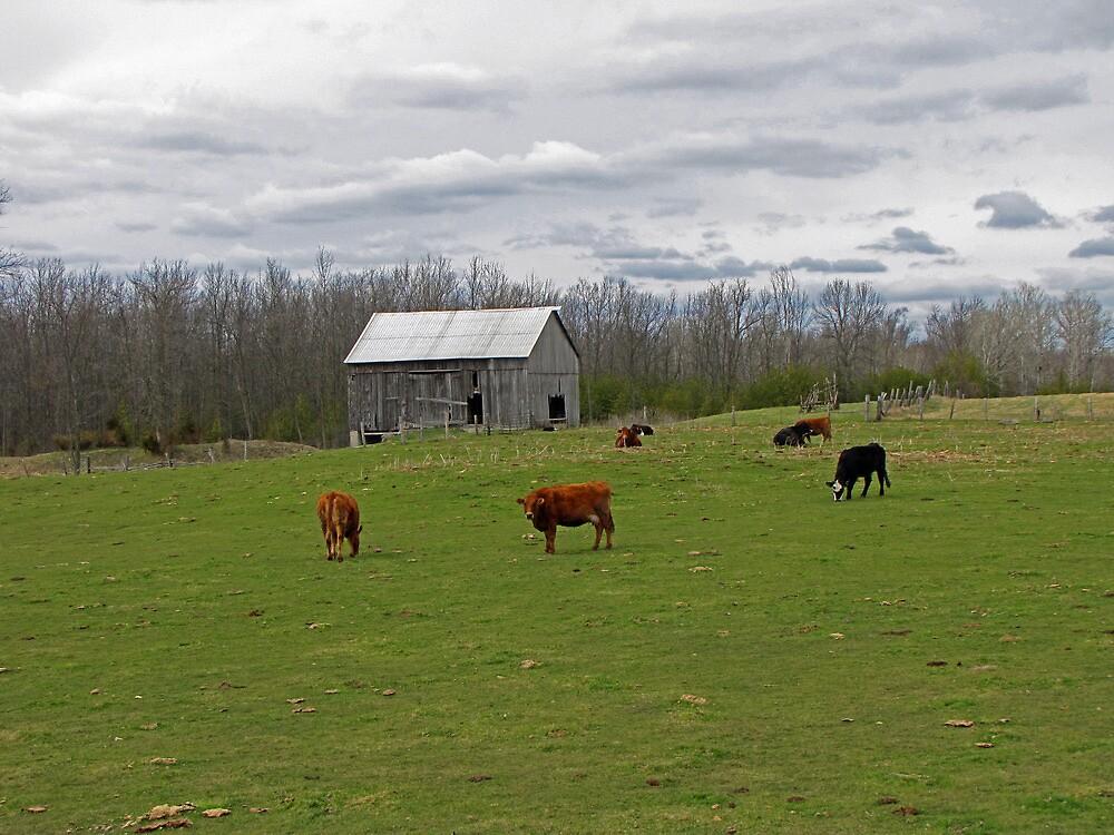 A Day on the Farm by nikspix