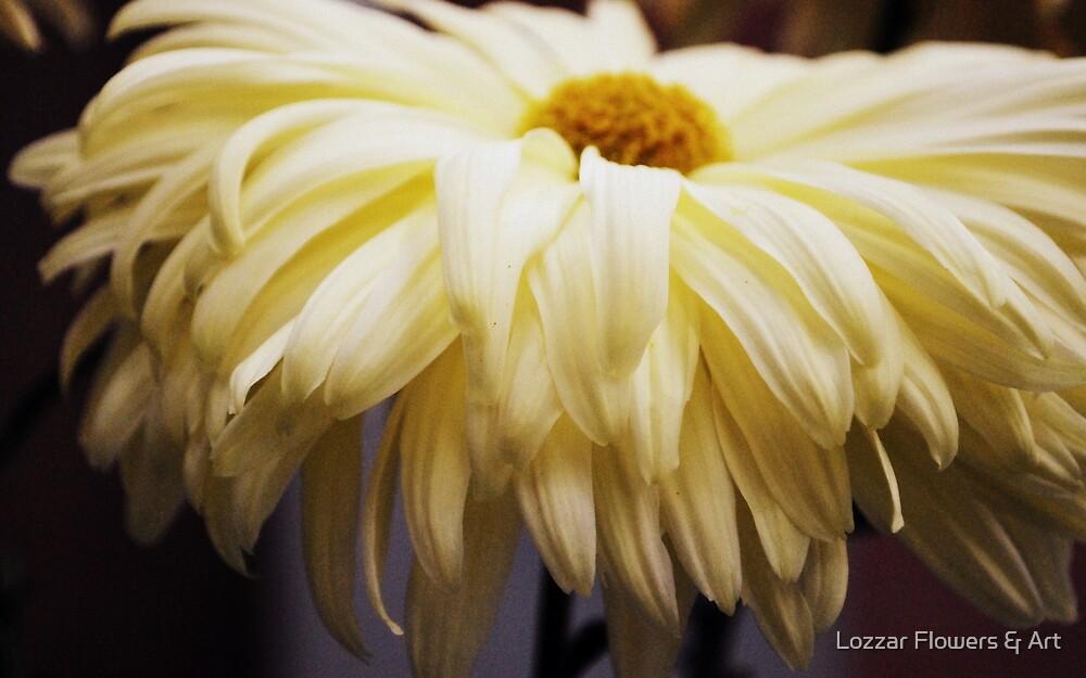 Soft Yellow Chrysanthemum by Lozzar Flowers & Art