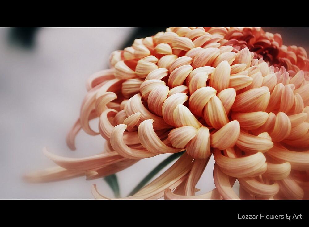 Film the Chrysanthemum by Lozzar Flowers & Art