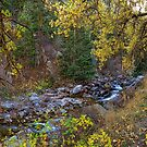 Boulder Creek Autumn View  by Bo Insogna