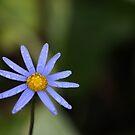 Wet Blue Daisy by Jackson  McCarthy