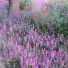 Spring Field Flowers by Ilunia Felczer