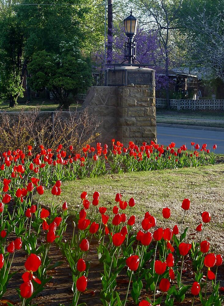 Red Tulip Curve by Carolyn  Fletcher