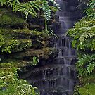 Fern Covered Waterfall by Anthony Roma