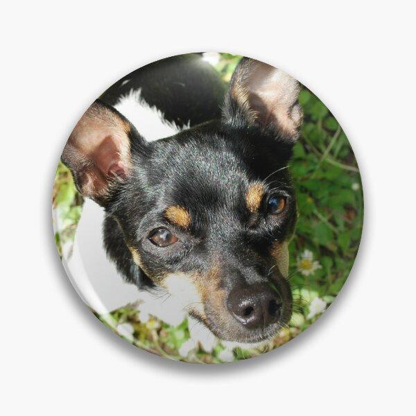 Rat Terrier in Daisies Pin