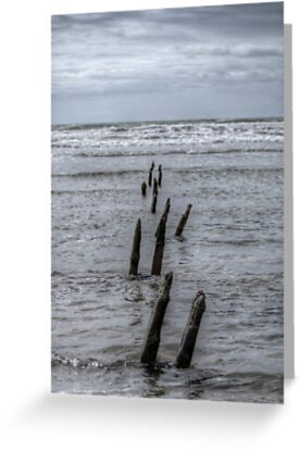 timber sea by tim williams