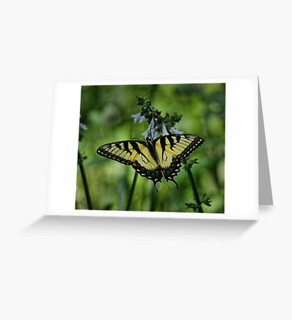 Yellow Swallowtail Greeting Card