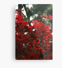 Leaves of Fire Metal Print