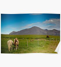 Crazy views of Iceland, Horses. Poster