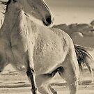Horse series #27 by BenjFavrat
