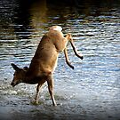 Wild Dancing by Rose Gallik