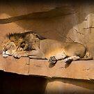 The Lion Sleeps Tonight by Anthony Roma